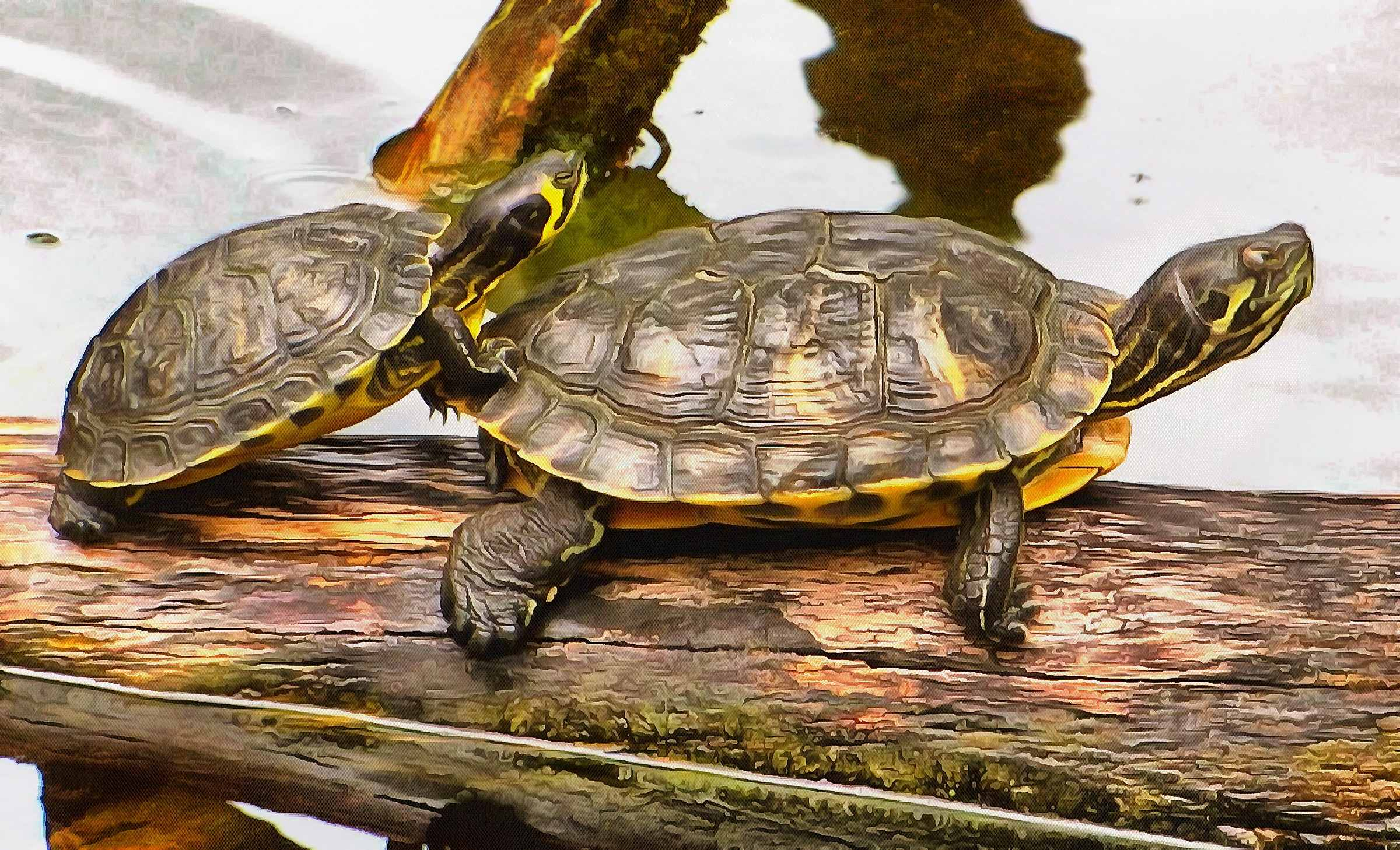 Turtle free images, Free Tortoise images, – free images turtles, tortoise public domain images, Turtle public domain images, Tortoise free!