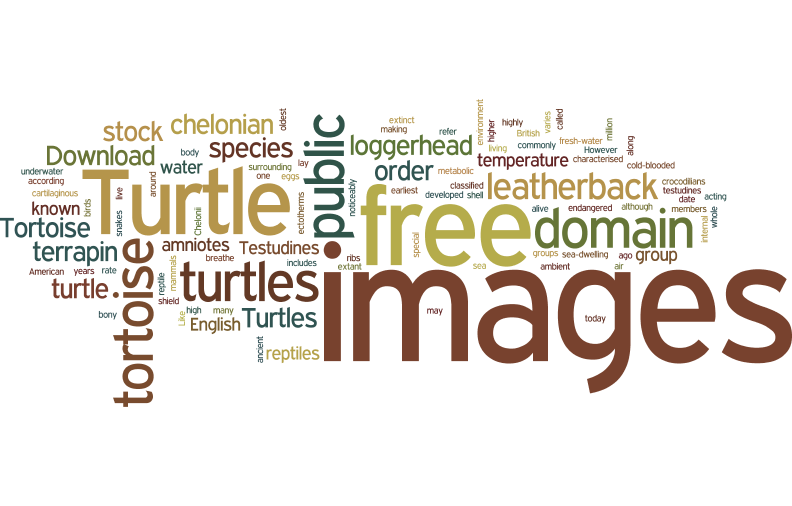 tURTLE AND TORTOISE WORD CLOUD