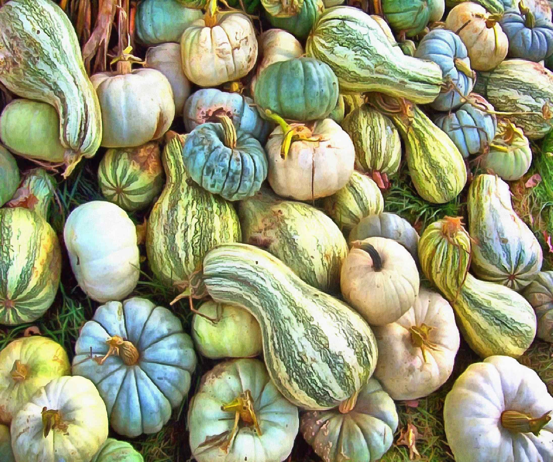 <br> pumpkin, harvest, holiday, vegetable, - thanksgiving, public domain images, stock free photos, free images, public domain photos, stock free images.