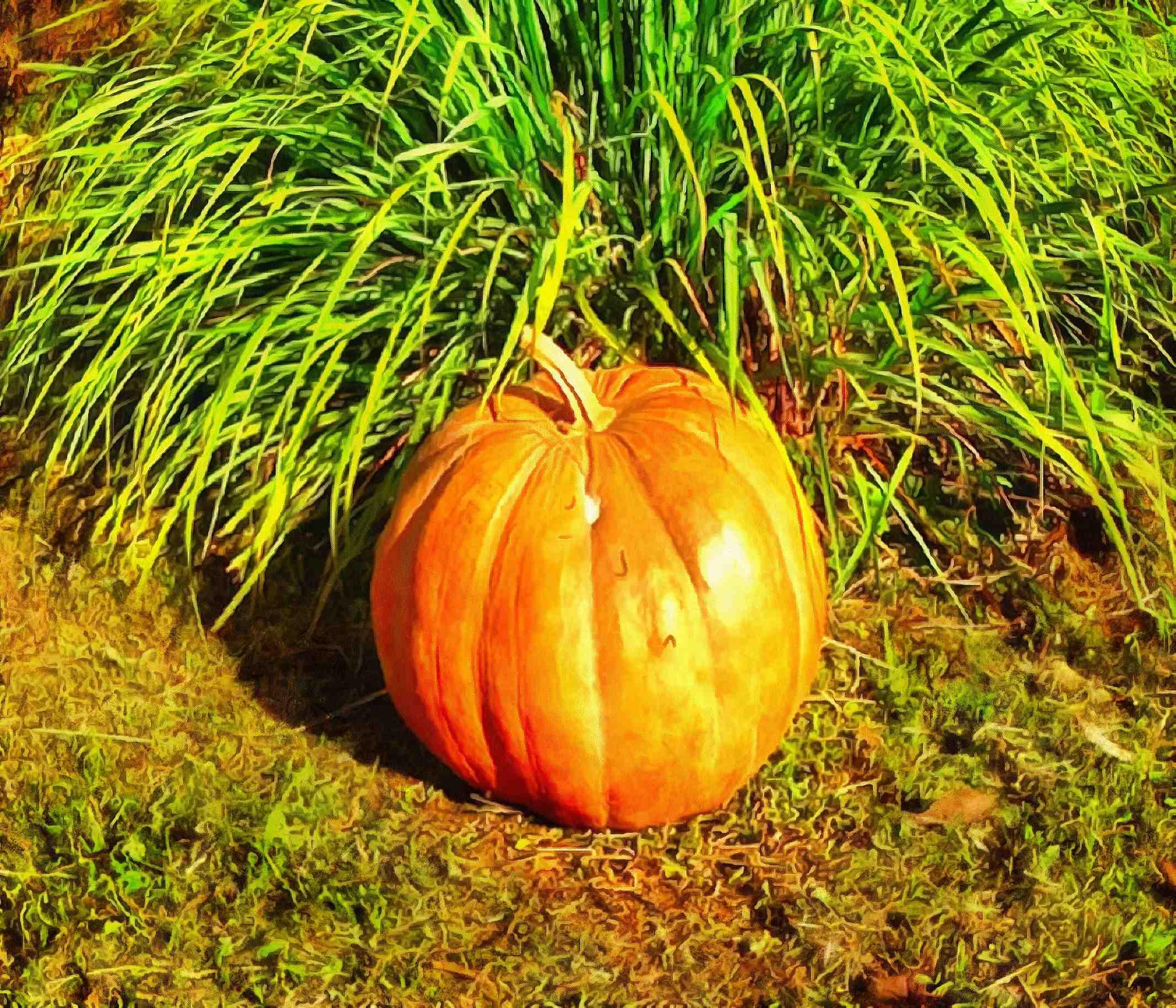vegetables, harvest, pumpkin, thanksgiving, holiday, - thanksgiving, stock free image, public domain photos, free stock photo, download public domain images.