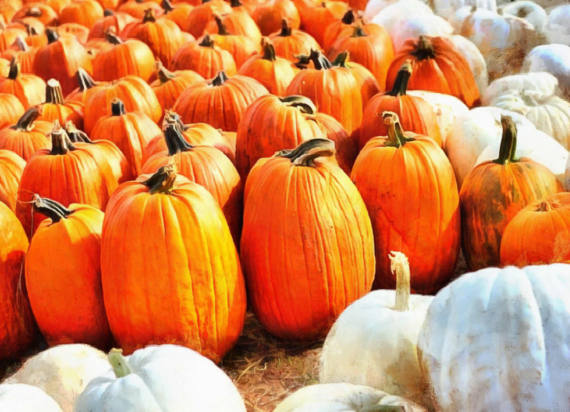 vegetables, harvest, pumpkin, thanksgiving, holiday, - thanksgiving, stock free image, public domain photos, free stock photo, download public domain images.