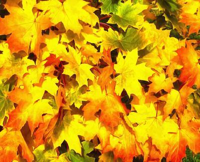 autumn, leaves, yellow leaves, leaf,