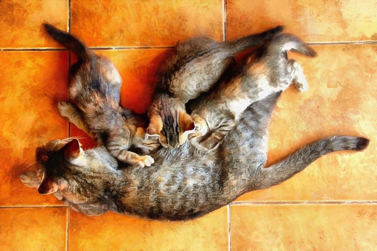 Animal Baby images, Free Stock Baby Animal Photos, Baby Animals, Baby Animal Photos, - Public Domain - Stock Free Images - Public domain!
