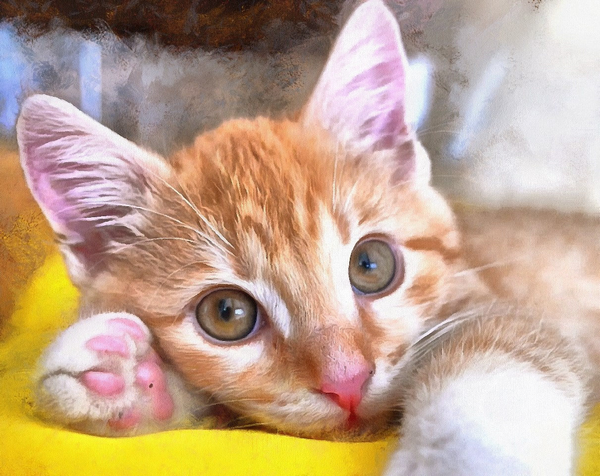 Cute Baby Animals Images Of Public Domain Pictures