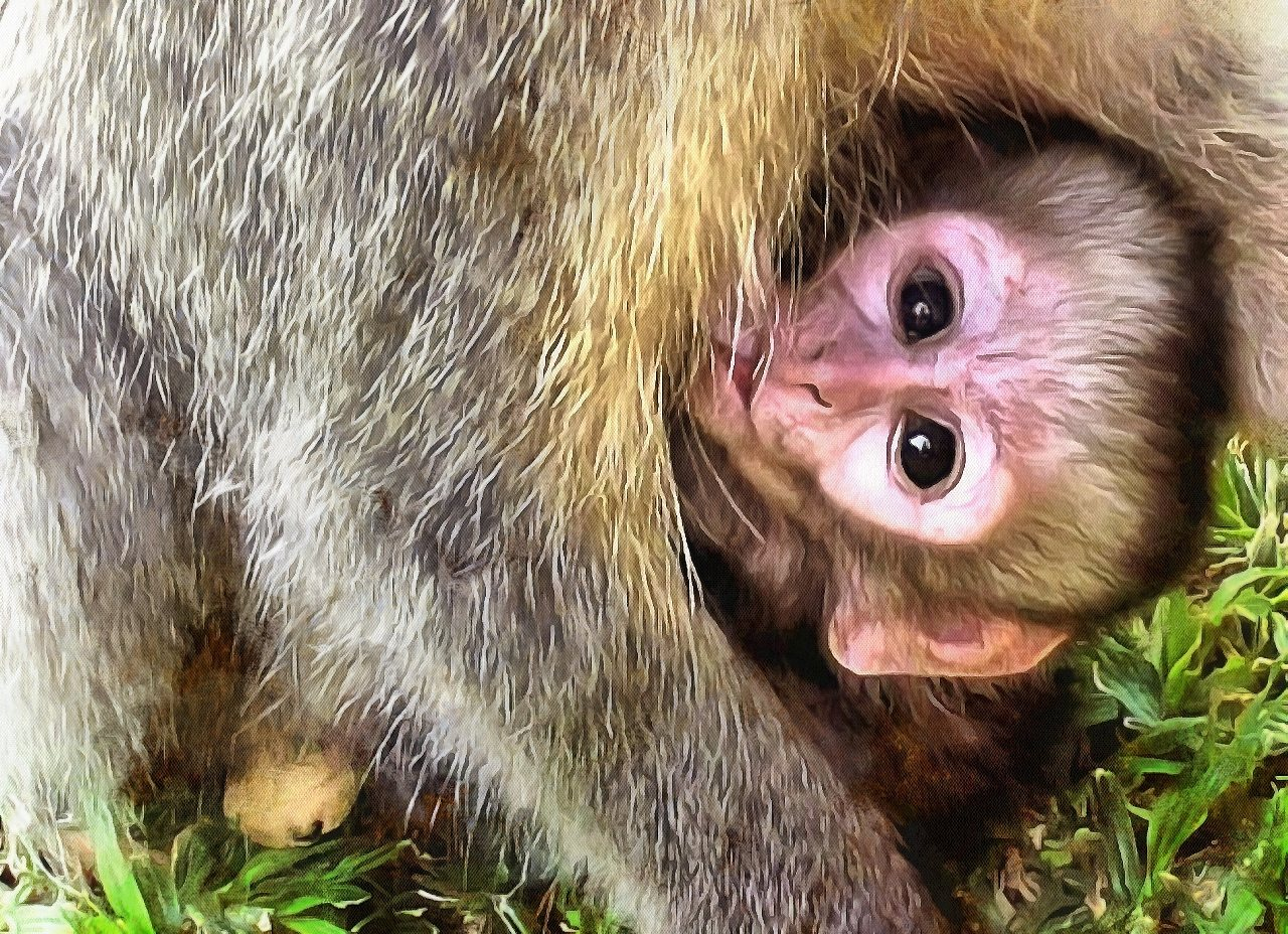 Cute baby animals, images of cute baby animals. Public Domain, Animals baby pictures, baby animals free images - Public domain - Stock Free Images - Public domain!