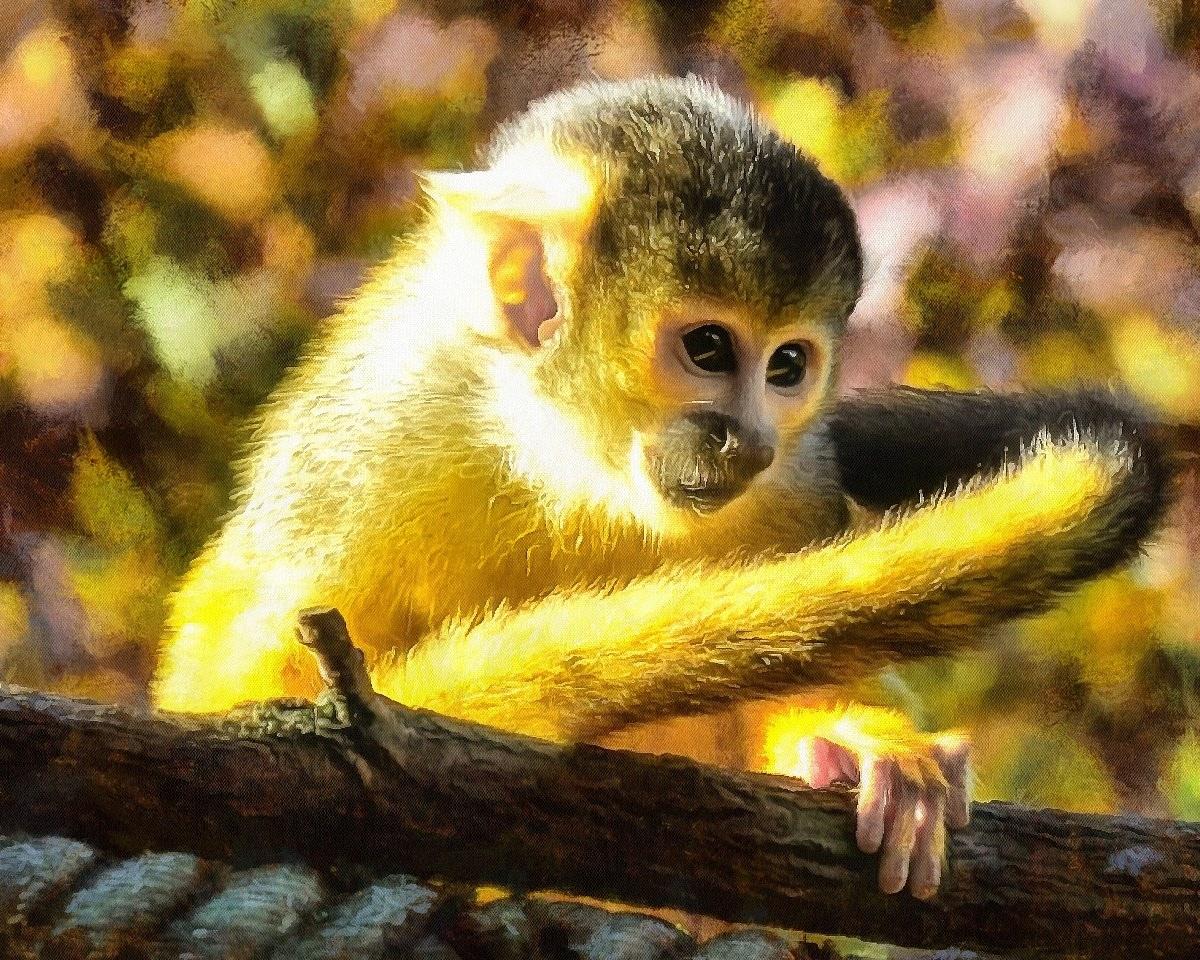 Public Domain, Animals baby pictures, Cute baby animals, images of cute baby animals, baby animals free images - Public domain