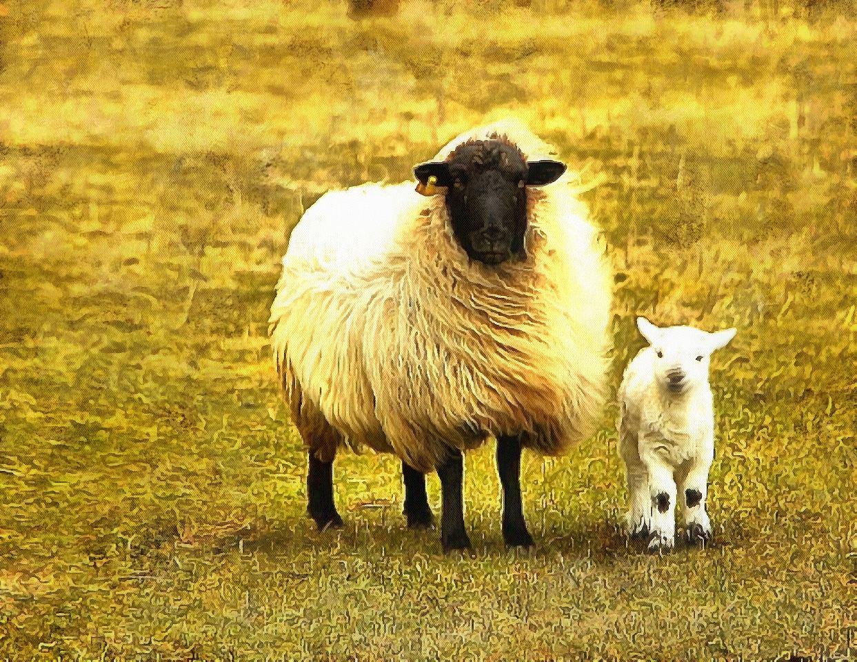 Baby animals photos, photos of small animals, - Public domainCute baby animals, images of cute baby animals. Public Domain, Animals baby pictures, baby animals free images - Stock Free Images - Public domain!