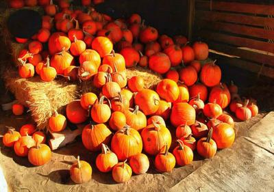 pumpkin, trade, tray, stall, holiday, lots of pumpkins, garden, spooky, halloween -  stock free photos, public domain images, download free images, free stock images, public domain