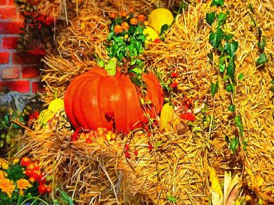 pumpkin, harvest, holiday, vegetable