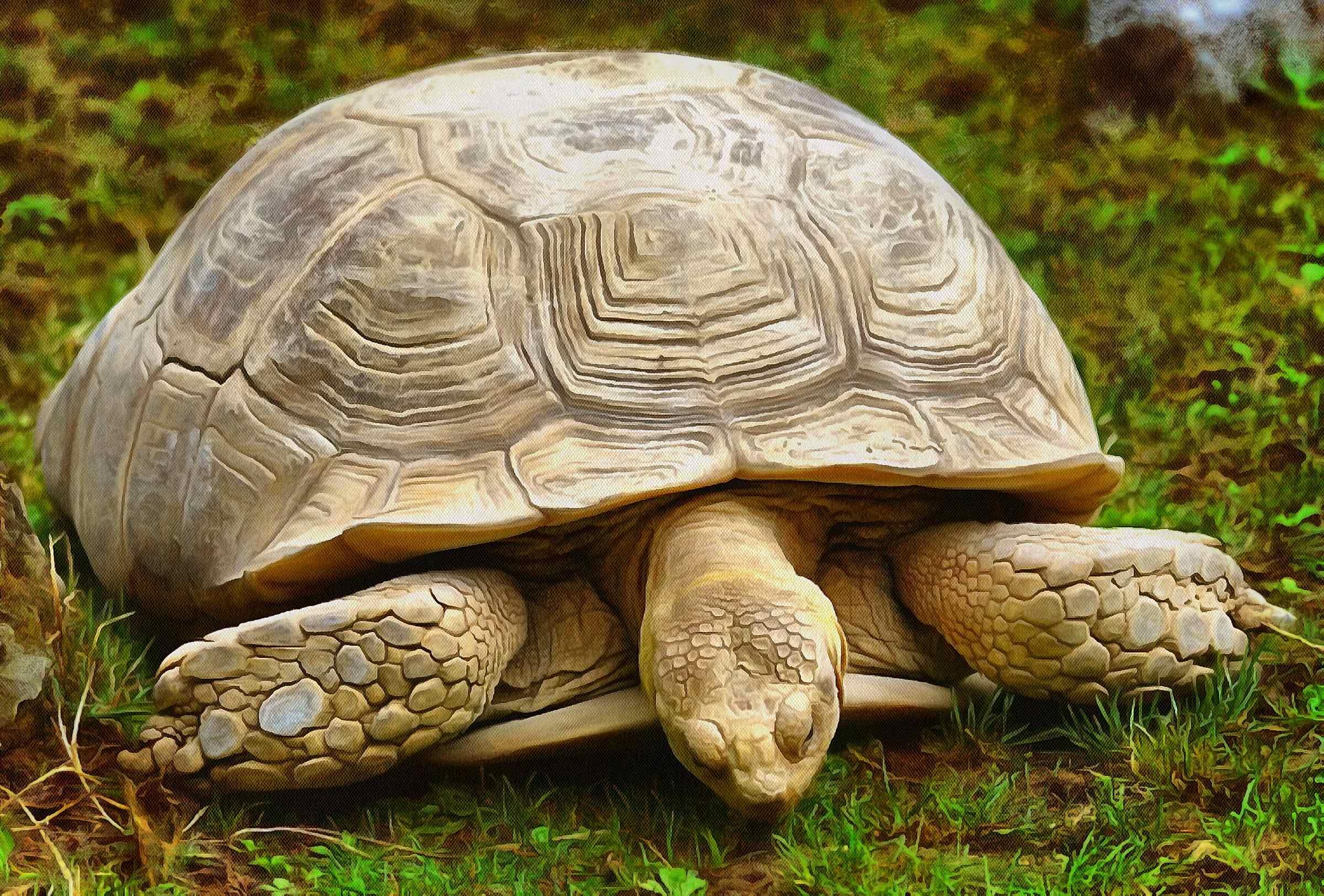 Free Tortoise images, Turtle free images,  –  Turtle stock free images, free images turtles, tortoise public domain images, Turtle public domain images, Tortoise free ,!