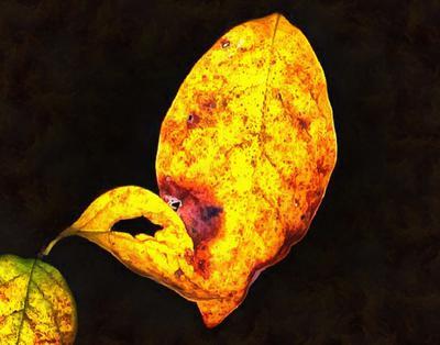 yellow leaf, leaf, red leaf, fall,