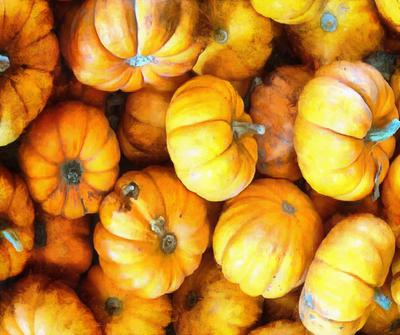 vegetables, harvest, pumpkin, thanksgiving, holiday,